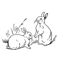 Two rabbit vintage vector