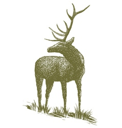 Woodcut elk vector