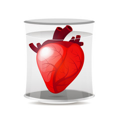 Isolated engraving colorful red human heart vector