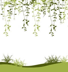 Green climber leaf and grass vector image