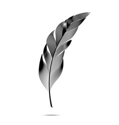black and white large curved fluffy feather vector image