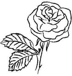 line drawing of rose -simple line vector image vector image