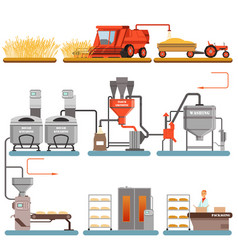 Bread production process stages from wheat harvest vector