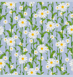 Seamless pattern from field chamomiles vector