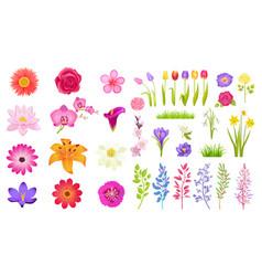 Set different flowers color vector