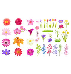Set of different flowers color vector