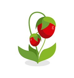 Red strawberries with green stems Juicy Berry with vector image vector image