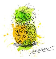 Sketch of pineapple vector