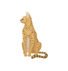 cute serval sitting and looking around wild cat vector image