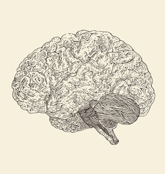 Human brain vintage engraved retro vector