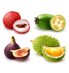 realistic exotic fruits set vector image