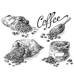 set of coffee beans in bag vector image