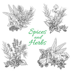 sketch poster of spices and herb seasonings vector image
