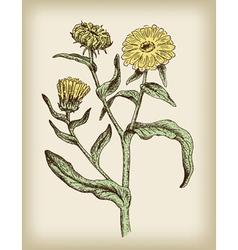 Medicinal plant vintage vector