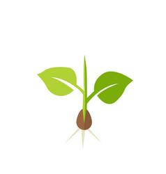 plant seedling vector image