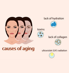 Causes of aging with two vector
