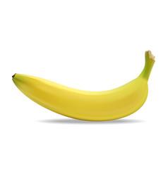 juicy yellow banana vector image