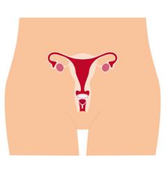 Menstrual cup - feminine hygiene product device vector