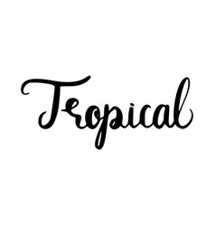tropical inscription brush vector image