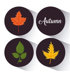 autumn season design vector image vector image