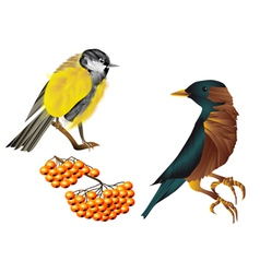birds and berries vector image vector image