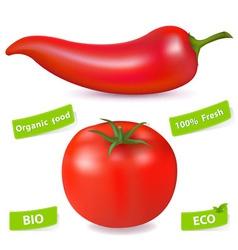 chili pepper and tomato vector image vector image