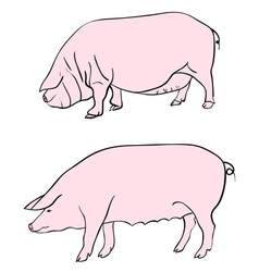 pig drawing vector image