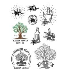 color olive symbol vector image