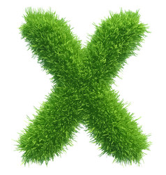 small grass letter x on white background vector image vector image