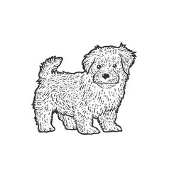Cute and fluffy puppy sketch scratch board vector