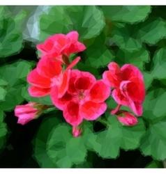 Geranium pelargonium flowers vector