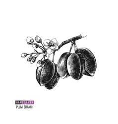 Hand drawn plum branch vector