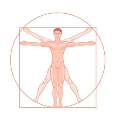 Leonardo da vinci vitruvian man proportion vector