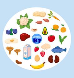 Set vitamin b7 origin natural sources healthy vector
