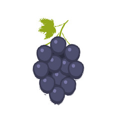bunche of grape vector image