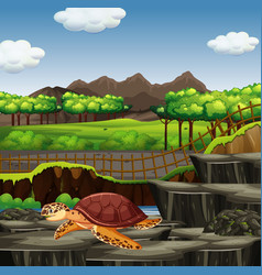Scene with sea turtle in zoo vector