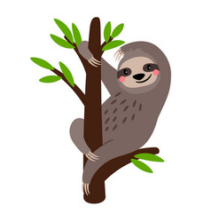 Sloth cute sloth bear animal character on vector