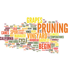 The annual life cycle of california vineyards vector