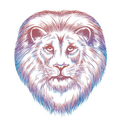 colorful lion head vector image