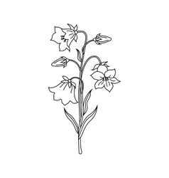 Bell flowers vector