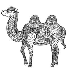 Camel coloring book vector