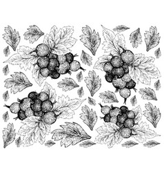 Hand drawn wallpaper of ripe jostaberries on white vector