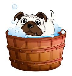 A bulldog inside the bathtub vector image vector image