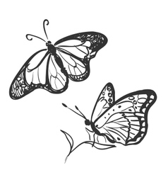doodle butterfly vector image vector image
