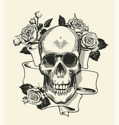 human skull with rose grasped with jaws and ribbon vector image vector image