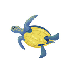 Blue turtle with a yellow belly and spots vector