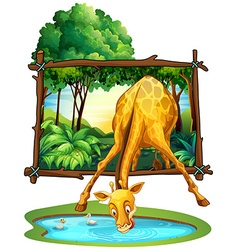 Giraffe drinking water in the jungle vector image