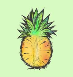 Hand drawn of half pineapple vector