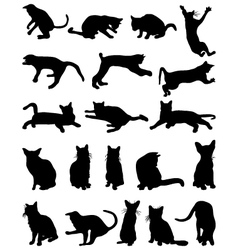 cats 2 vector image vector image
