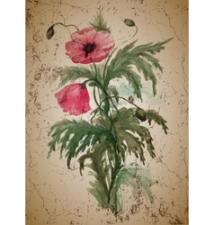 Bouquet red poppies vector